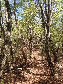 滝戸山登山道