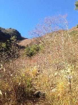 王岳登山道
