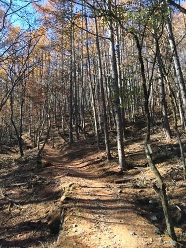 高谷山登山道2