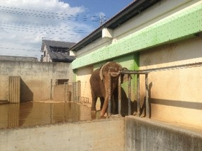遊亀公園附属動物園3