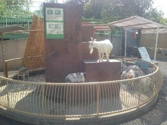遊亀公園附属動物園2